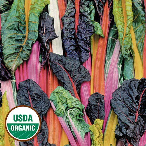 Swiss Chard, Five Color Silverbeet